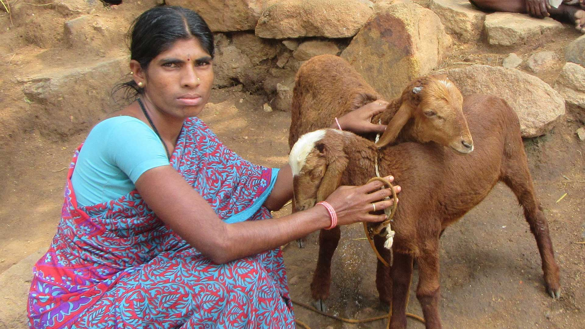 Female carer with her two goats in India